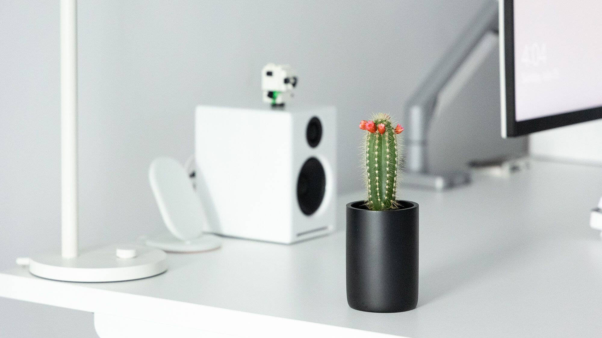 Bogdan bought Gioni in a construction store. He was picky about the colour, the shape, and the size, so it took him a while to find the perfect cactus