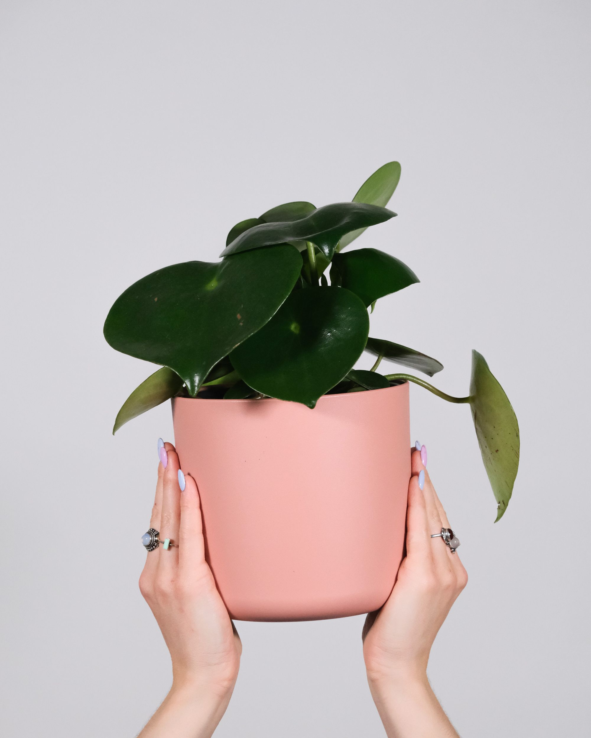 Unkillabel low-light plants for a windowless home office — peperomia